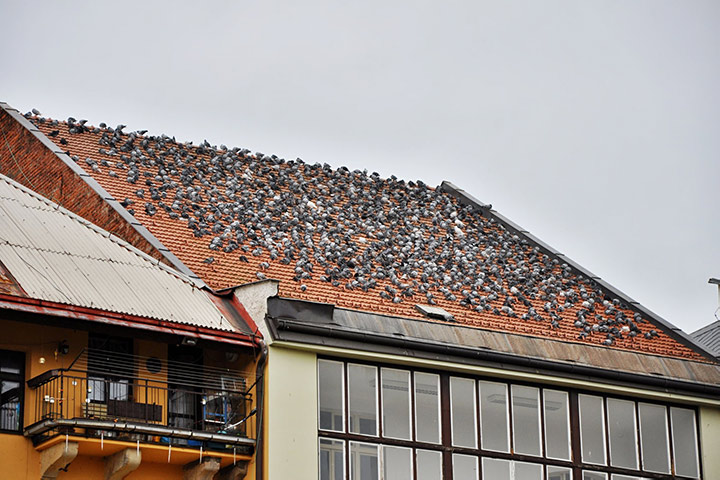 A2B Pest Control are able to install spikes to deter birds from roofs in Harwich.