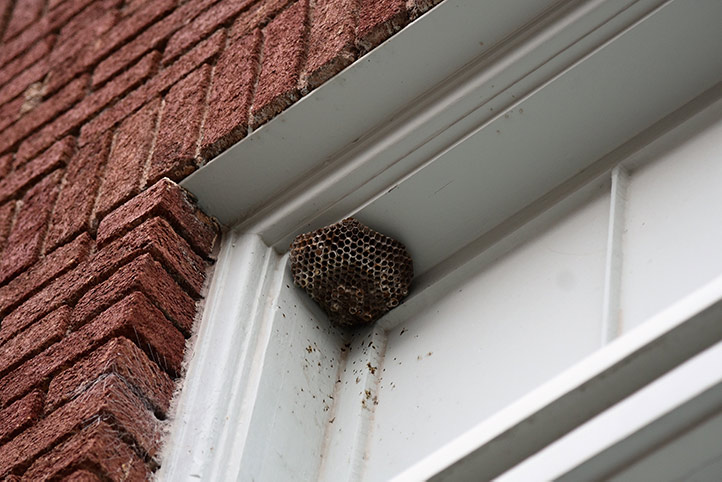 We provide a wasp nest removal service for domestic and commercial properties in Harwich.